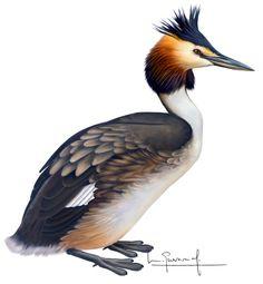 Bird, Birds, Animales, Sculptures, Illustrations, Drawings