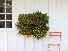 Cómo crear un jardín vertical con Woolly Pocket