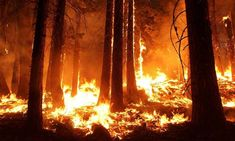A new study shows that air pollutants from the smoke of fires from as far as Canada and the southeastern U. traveled hundreds of miles and several days to reach Connecticut and New York City, where it caused significant increases in pollution Llamas, Siberia, California Wildfires, Twitter Video, Amazon Rainforest, Will Turner, Historical Society, Natural Disasters, Global Warming