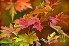 Beautiful digital paint effects in this wonderful autumn capture, Debbie!