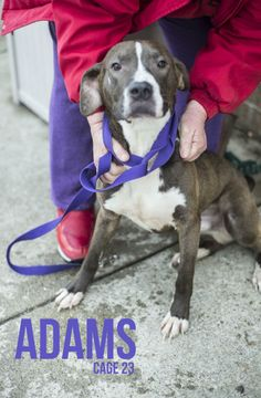 "URGENT! PLEASE RESCUE ""ADAMS""!!! (very sweet) CANTON, OHIO....Update 3/22:  Adams is really making the best of a bad situation, and trying to stay hopeful.  He just wants a family to run and play with, wear him out, and you in the process!  He loves playing in the snow, mud, rain, whatever nature brings his..."