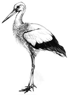 Winstub' Stork on Behance Illustration Clémence Thienpont