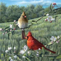 Cardinal Pair in the Meadow Coaster