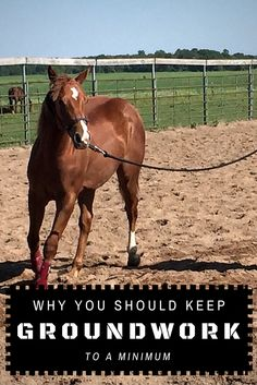 AQHA Professional Horseman Curt Pate explains why you should keep groundwork to a minimum during horse training. Horses And Dogs, Show Horses, Dressage, Horse Riding Tips, Horse Tips, Horse Training, Training Tips, Horse Exercises, Horse Books