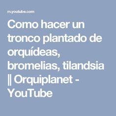 Como hacer un tronco plantado de orquídeas, bromelias, tilandsia || Orquiplanet - YouTube