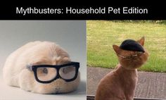 Dump A Day Funny Pictures Of The Day - 81 Pics. Mythbusters: Household Pet edition