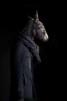 Top 10 Animals Dressed as Human Beings | UNIQUE http://www.delightfull.eu/
