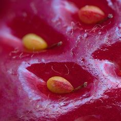 Macro photo: surface of strawberry fruit with seeds and visible cell structure Fotografia Macro, Strawberry Seed, Strawberry Fields, Bataille De Verdun, Color Explosion, Foto Macro, Eclipse Solar, Microscopic Images, Glass Frog