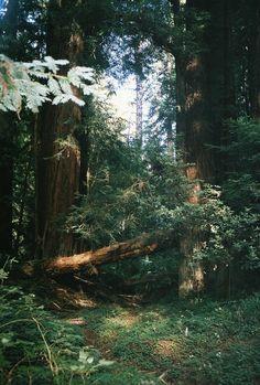 upclosefromafar:~My Hidden Nirvana~ #timber ❤️