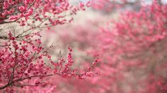 pink photography wallpaper free