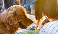 Knowing how to stop your dog barking is an essential skill for pet owners, especially if you want to stay on friendly terms with your neighbors. Golden Retriever, Pet Insurance Quotes, Miss My Dog, Dead Dog, Son Chat, Dog Barking, Family Dogs, Dog Owners, Doge