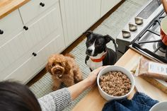 A smarter, healthier dog food: 100% human-grade food, pre-portioned and delivered to your door. Better for them & easier for you. Create your plan today! Best Dog Food, Dry Dog Food, Pet Food, Spinach And Tomato Tortellini, Creamy Spinach, Tortellini Bake, Cheesecake Truffles Recipe, Human Grade Dog Food, Prescription Dog Food