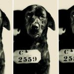 The True Story of the Cat-Murdering Dog Who Actually Went to Jail
