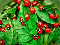 Hello Ladybugs by saro jaf on 500px
