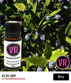 10ml Myrtle Myrtus Communis Essential Oil Aromatherapy