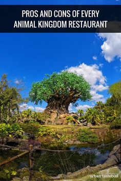 Best Animal Kingdom Restaurants - Pros and Cons (and Tips!) Best Animal Kingdom Restaurants - Pros and Cons (and Tips Disney World Florida, Walt Disney World Vacations, Disney Trips, Disney Travel, Disney Parks, Animal Kingdom Dining, Animal Kingdom Restaurants, Best Disney World Restaurants, Epcot Restaurants