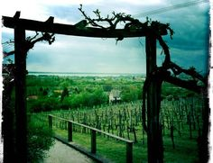 Balaton Places In Europe, Places To Travel, My Heritage, Garden Bridge, Hungary, Wines, Places Ive Been, Outdoor Structures, Culture