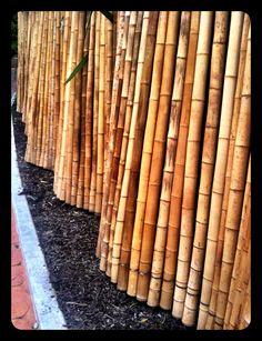 Bamboo fence at Wellington Zoo