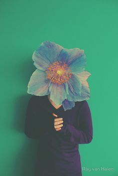 Flowerheads by Ray van Halen #Flowerheads #Flowers #Colorful #Vintage #Photography #Surreal #Conceptual #Redbubble #BluePapaver