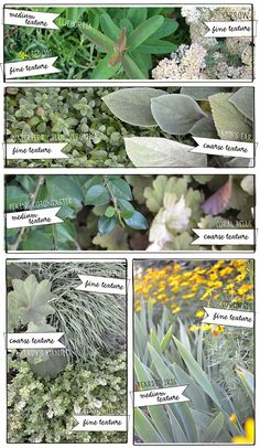 Lisa Orgler Design: MAKE YOUR GARDEN POP WITH TEXTURE