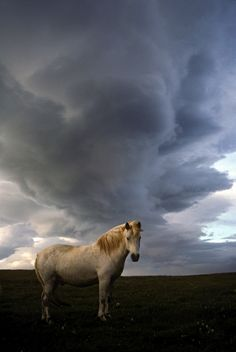 Icelandic and storm clouds