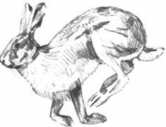 Картинки по запросу бегущий заяц рисунок