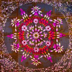 "shantelbryan: ""Flower Mandalas (Danmalas) by Kathy Klein In vedic sanskrit dān: the giver, mālā: garland of flowers the giving of flower circles My mom carries an orb of light with her wherever she..."