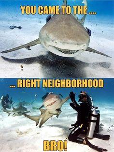 Happy Shark Week