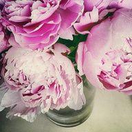 Pink peonies!!!
