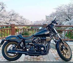 #cse @redthunder_exhaust @hy_hd.lrs Cherry blossom Harley Davidson 日本 United States #harleydavidson #cherryblossom #fxdls #rtbmotorcycle #redthunderexhaust # #ハーレー #ハーレーダビッドソン #ローライダーs #山崎川