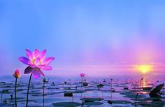 When~ I ~let ~go ~of ~what~ I am~, I become ~what`~ I ~might~ be. Lao Tzu