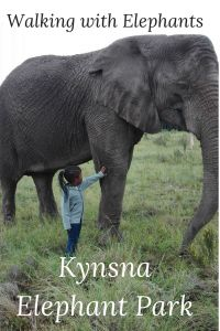 7 Things to do in Knysna with small kids - MumInMe Sick Baby, Sick Kids, Stuff To Do, Things To Do, Cat S, We Get Married, Zebras, Have Time, Animales