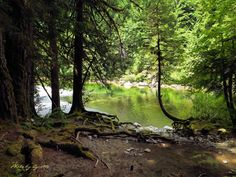 Peppercorn Park and Trails. Gold River, Vancouver Island, Trail, Camping, Gardening, Park, Nature, Plants, Pictures
