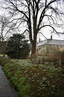 the blackberry garden: Snowdrops and aconites at Little Ponton Hall