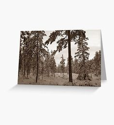 Magic Winter Sepia Greeting Card