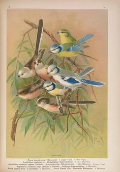 v. 2 (1905) - Naumann, - Naturgeschichte der Vögel Mitteleuropas.