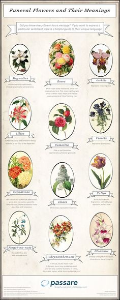 Need help deciding on which types of flowers to include in your funeral flower arrangement? Check out this list of some of the most popular funeral flowers and their meanings. Collateral Beauty, Flower Meanings, Flowers And Their Meanings, Flowers With Meaning, Funeral Planning, Funeral Ideas, Fleur Design, Funeral Flower Arrangements, Funeral Memorial