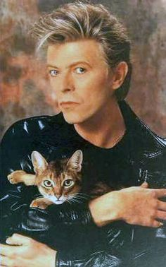 Cat with Bowie