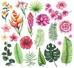 2752 Mejores Imagenes De Flores Tropicales En 2019 Beautiful