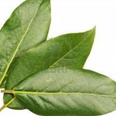 Laurel y Brandy Plant Leaves, Tea, Health, Nature, Flowers, Image, India, Vegetables, Natural Face Masks