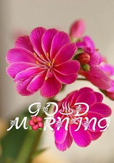 - Salvabrani Morning Qoutes, Cute Good Morning Quotes, Good Morning Cards, Good Morning Images Hd, Morning Morning, Good Morning World, Morning Greetings Quotes, Good Morning Picture, Good Morning Messages