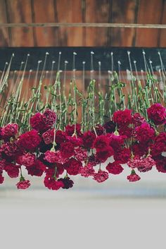 Suspended Marsala Carnations. Just Beautiful!: