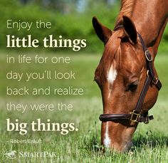 Enjoy your day! This is how I feel when I see my horses munching in the pasture.