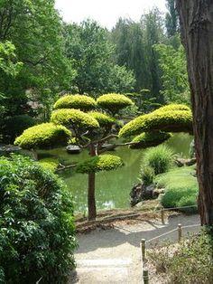 If taillé, Parc Oriental de Maulévrier Garden Waterfall, Images, Japanese Gardens, Waterfalls, Plants, Gardens, Exotic, Park, Waterfall
