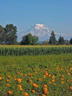Pumpkins and mountain