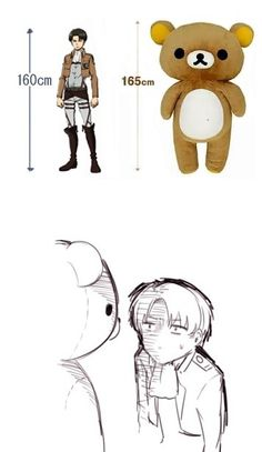 Rivaille (Levi) I neeeeedddd that bear!!!!!!!