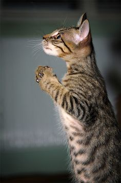 Just saying a little prayer, then I get tuna.