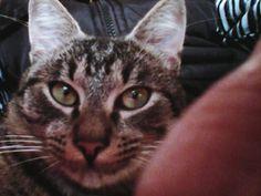 , Cats, Animals, Gatos, Animales, Kitty Cats, Animaux, Animal, Cat, Kitty