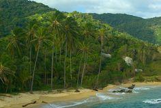Palm trees on beach in Tayrona National Park