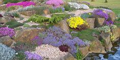 Main feature rock garden, Pottertons nursery.  I want a BIG rock garden like this! CB